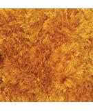 RugStudio presents Chandra Sunlight Sun9802  Area Rug